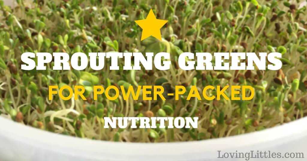 Sprouting Greens for power-packed nutrition is easier than you'd think. Once your body gets a taste of these tiny, nutrient-rich greens, you'll never look back.